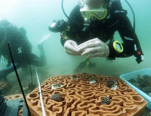 3D štampa u spašavanju korala